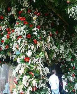 写真 馬酔木と椿でびっしり彩られた東大寺の花御堂