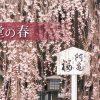 トップページ|千本釈迦堂 大報恩寺
