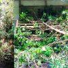 平成30年9月 台風21号による境内被災報告、復興へのご協力のお願い | 京都洛北の古刹